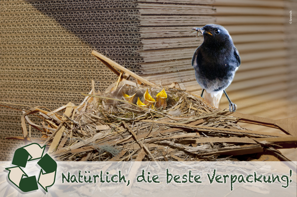 Wellpappe Nest